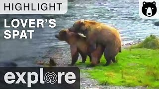 Download A Lover's Spat - Katmai National Park - Live Cam Highlight Video