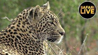 Download safariLIVE - Sunrise Safari - June 25, 2019 Part 2 Video