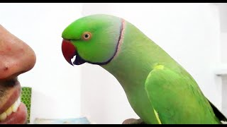 Download Conversation with my parrot,Worlds best Bird. Video