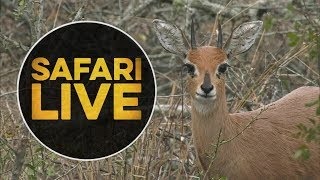 Download safariLIVE - Sunrise Safari - July 11, 2018 Video