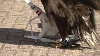 Download Eagles vs Drones Video