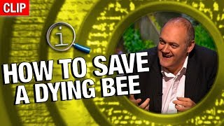 Download QI | How To Save A Dying Bee Video