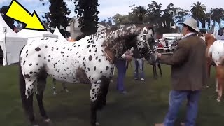 Download 5 Horses You Won't Believe Actually Exist! #2 Video