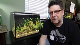 Download Pom Pom Crabs and Dwarf Golden Barbs Video