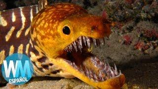 Download ¡Top 10 Criaturas Marinas Más PELIGROSAS! Video