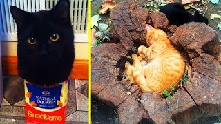 """Download Cats Said """"If I Fits, I Sits"""" And Proved Themselves Right 「 funny photos 」 Video"""