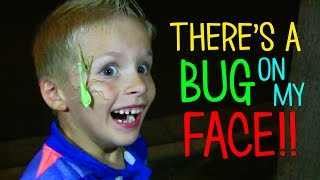 Download A BUG IS ATTACKING MY FACE!!! Video