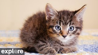 Download Kitten Cabana - Big Cat Rescue powered by EXPLORE.org Video