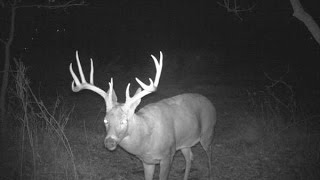 Download Amazing Trail Camera Pictures Video
