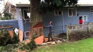 Download Awesome slow motion tree felling/ removal Video