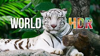 Download The World in HDR in 4K (ULTRA HD) Video