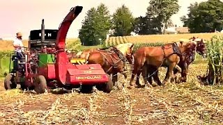 Download Amish Farmer with 8 Horse Hitch Chopping Silage Video