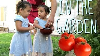 Download IN THE GARDEN! - August 12, 2016 - ItsJudysLife Vlogs Video
