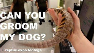 Download CAN YOU GROOM MY DOG? (Walking My Skink Around Town) Video