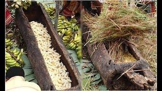 Download Bóc vỏ 500 quả chuối cho vào thân gỗ rỗng ,1 tháng sau khiến cả thế giới đổ xô về thử Video