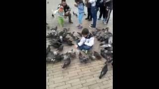 Download tecnica infalible como atrapar con comida y estrategia a una paloma y luego dejarla libre 2014 Video