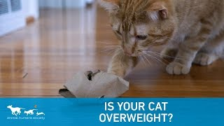 Download Is your cat overweight? Video