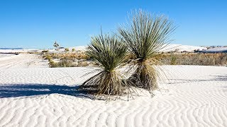Download White Sands National Monument, New Mexico, USA in 4K Ultra HD Video