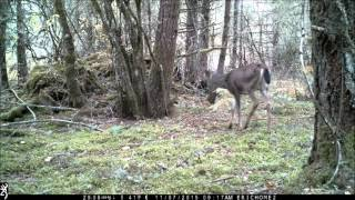 Download Browning Spec Ops FHD Trail Camera Video