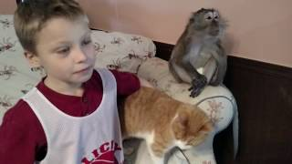 Download Happy Kids Are Surrounded With Fur Friends Video