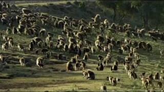 Download Natural World - Clever Monkeys (Part 5/6) Video