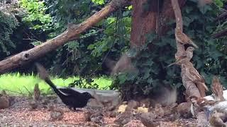 Download Monday 08-14-2017 04:05 pm - 05:20 pm Wildlife Feeder Cam Video