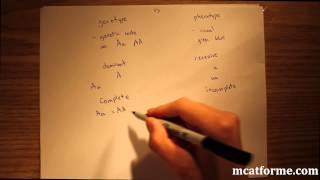 Download MCAT Biology Lecture: Introduction to Genetics Video