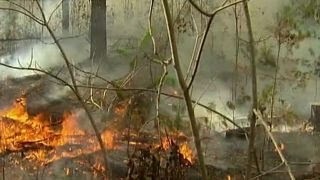 Download Fall leaves fuel wildfires across seven southern states Video