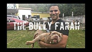 Download HORA DE VER OS BULLYS - CANIL THE BULLY FARAH Video