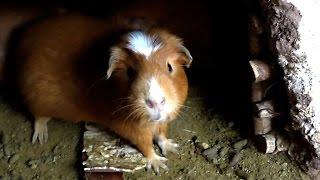 Download Peru VLOG 2 - EATING Guinea Pig & Cusco Video