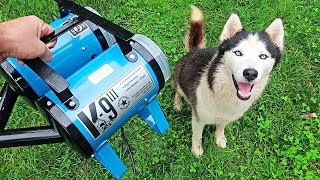 Download ″K-9 III″ Best Husky Coat Deshedder! - Husky Coat Blow Out Video