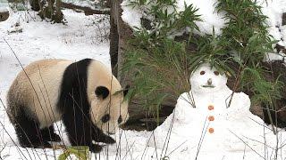 Download Panda Yang Yang und ihr Schneemann Video