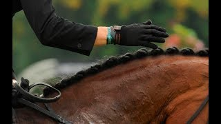 Download The 'Must Know' Basics of Petting Your Horse Video