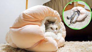 Download 寒くなって来たのでネコ吉にペットベッドクロワッサンをプレゼントしました Video