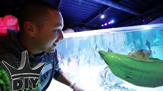 Download I NEED THIS AQUARIUM!!! Video