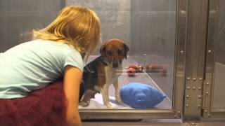 Download Shelter Dog Suzie Gets Adopted - MD SPCA VERSION Video