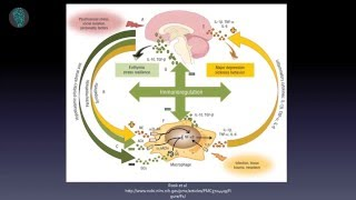 Download ″Brain-Gut Axis: The Effect of Intestinal Microbiome on Mental Health″ - Dr Emily Deans Video
