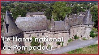 Download La Haras national de Pompadour Video