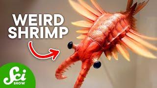Download 10 Strange-Looking Prehistoric Animals Video