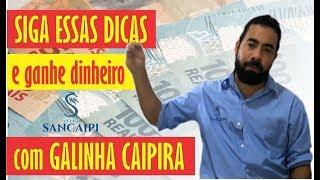 Download como GANHAR DINHEIRO rápido com a criação de GALINHA CAIPIRA para abate Video
