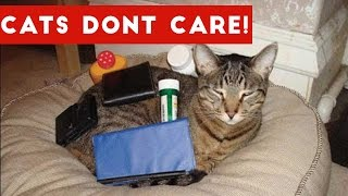 Download Cats Don't Care Funny Pets Videos   Best Funny Cat Videos Ever Video