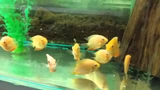 Download Tienda de peces agrojardin Video