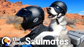 Download Dog Rides A Motorcycle With His Dad Through All 50 States | The Dodo Soulmates Video