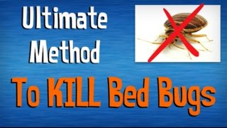 Download How to Kill Bed Bugs FAST | Best Advice on Killing Bed Bugs Yourself | Natural Pest Control Tips Video