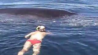 Download Humpback Whale Shows AMAZING Appreciation After Being Freed From Nets Video