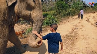 Download Boy Is Growing Up Rescuing Elephants   The Dodo Video