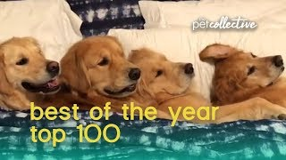 Download Best Pets of the Year 2019 (Top 100) | The Pet Collective Video