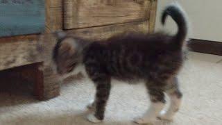 Download Kitten Close Up 2017-10-11 Video