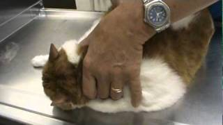 Download Cat Vet Visit Video