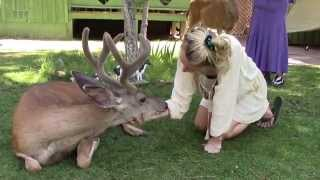 Download Our wild deer friend Yoda - surprisingly calm - ASMR Video